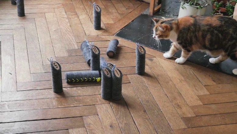 Photo rare d'un chat jouant au Mölkky quilles molles